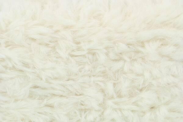 Schachenmayr Teddy für alle Felle Farbe 0002 sheep